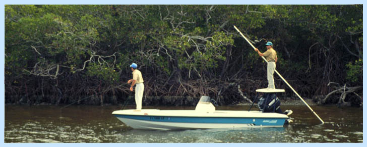 Naples florida fishing for Fish naples fl